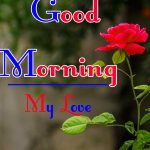 Red Rose Good Morning Images 71