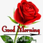 Red Rose Good Morning Images 74