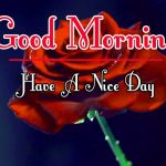 Red Rose Good Morning Images 79