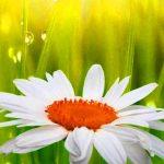 Flower Whatsapp DP Profile Pics Photo Download