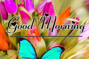 Free New morning Images HD 64