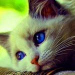 Sweet Whatsapp Dp Profile Images 3