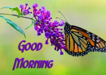 56+ Good Morning Images Photo Pics With Butterfly Download