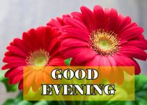 140+ Romantic Good Evening Images HD Download