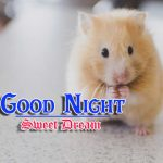 Best Night Images HD Download 15
