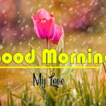 Flower Good Morning Wallpaper