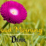 good morning images for flower 7