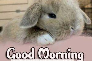 Animal Bird Lion Good Morning Images Download 65