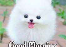 Animal Good morning Wishes Images Download 84