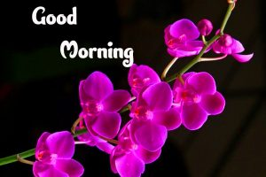 Good Morning Wallpaper !! Today Update Images Pics { 2021 }