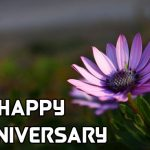 Flower Happy Anniversary Photo Download for Whatsapp