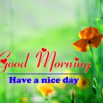 Good Morning Photo Pics With Flower