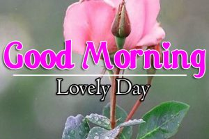 587+ Good Morning Images 4k For Girlfriend / Friend Download